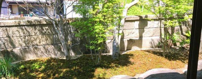新緑 お庭 ドウダンツツジ