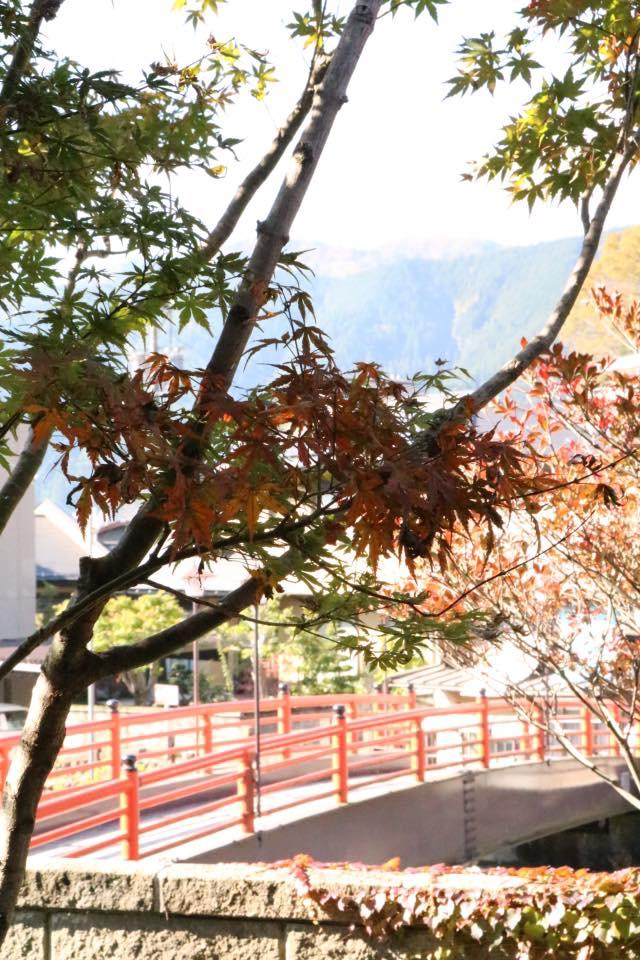 清水橋 紅葉