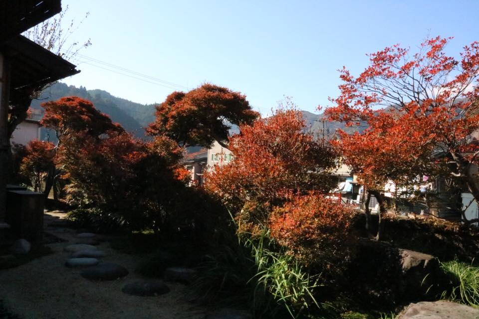 ドウダンツツジ 紅葉 庭