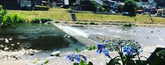 梅雨,郡上八幡,紫陽花