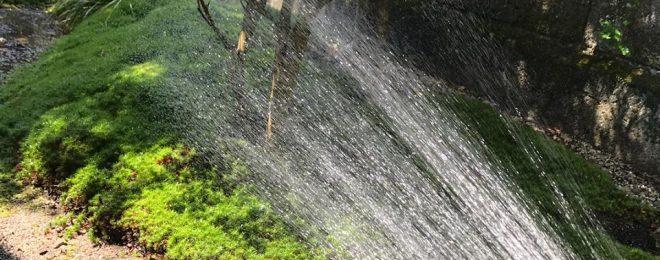 庭,苔,水やり